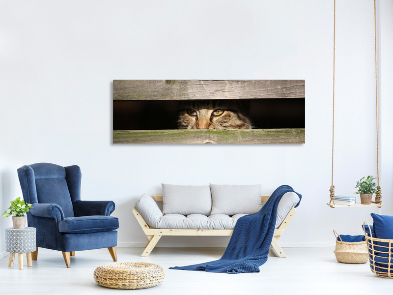 Panoramic Canvas Print Cat in hiding