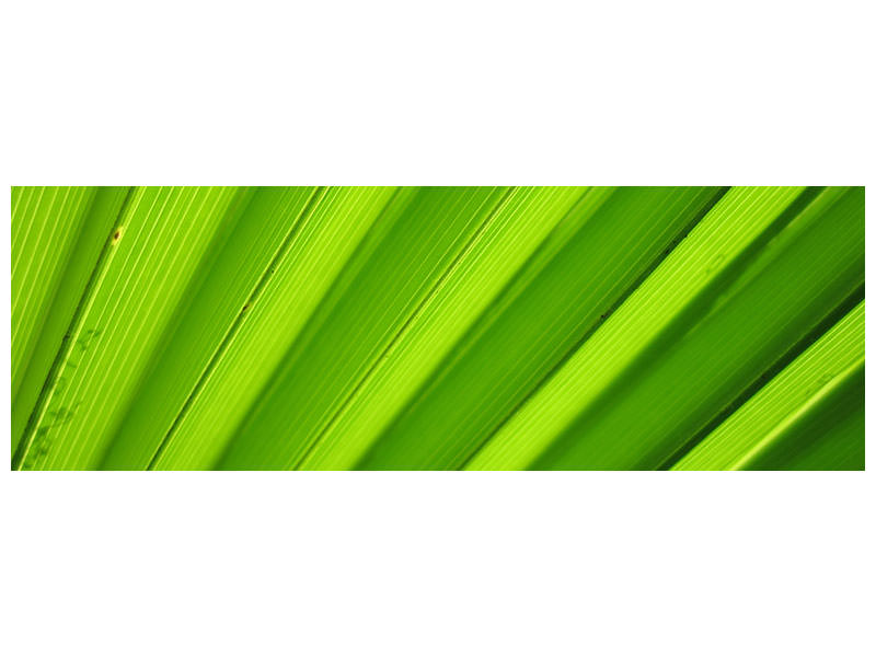 Panoramic Canvas Print Palm stripes 2