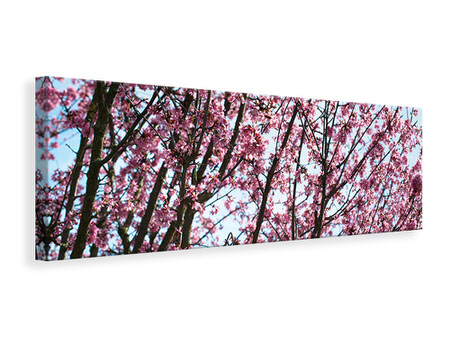 Panoramic Canvas Print Japanese Cherry Blossom