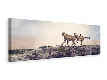Panoramic Canvas Print Two Cheetahs