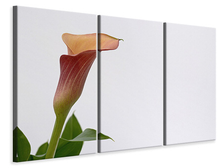 3 Piece Canvas Print Calla in XL