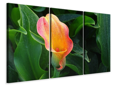 3 Piece Canvas Print Wild Calla