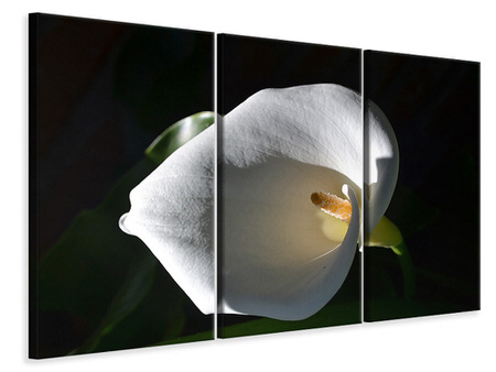 3 Piece Canvas Print Wonderful calla