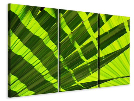 3 Piece Canvas Print The palm leaf in XL