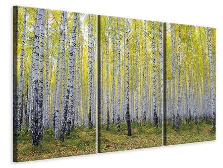 3 Piece Canvas Print Autumnal Birch Forest