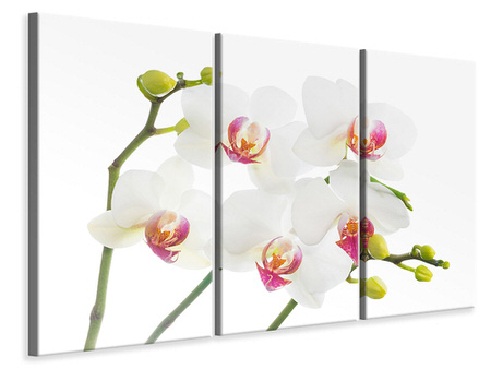 3 Piece Canvas Print Orchids Love
