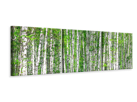 Panoramic 3 Piece Canvas Print The Birch Forest