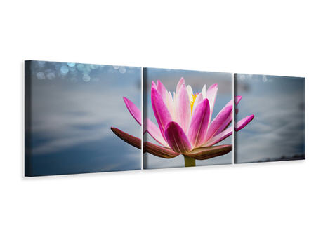 Panoramic 3 Piece Canvas Print Lotus In The Morning Dew