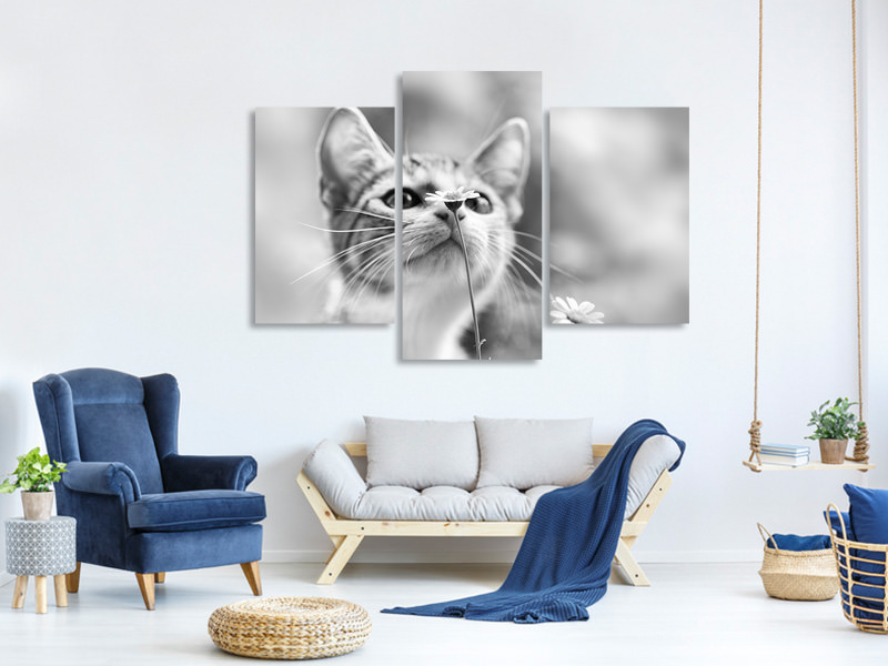 Modern 3 Piece Canvas Print Curious