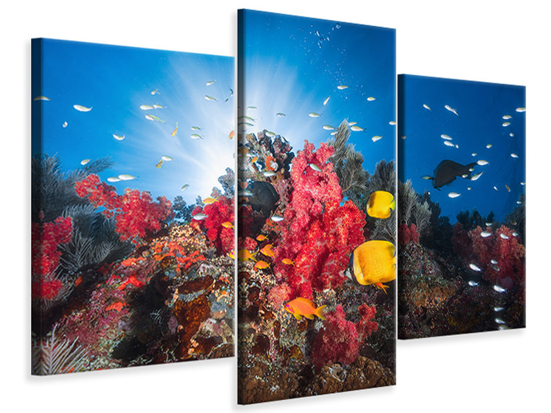 Modern 3 Piece Canvas Print Reef Life