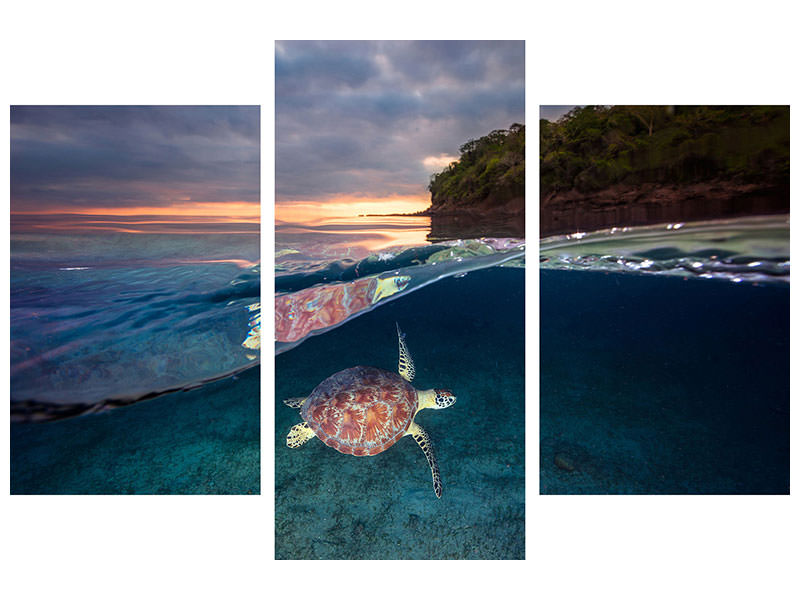Modern 3 Piece Canvas Print Green Turtle With Sunset