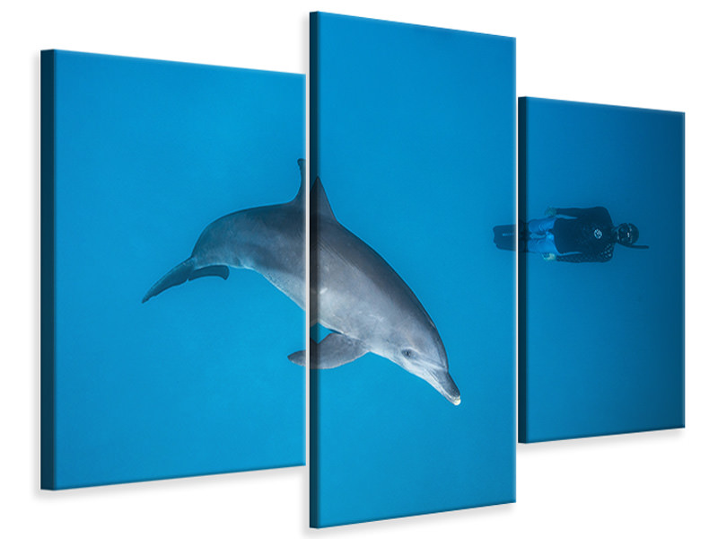 Modern 3 Piece Canvas Print Dolphin And Freediver
