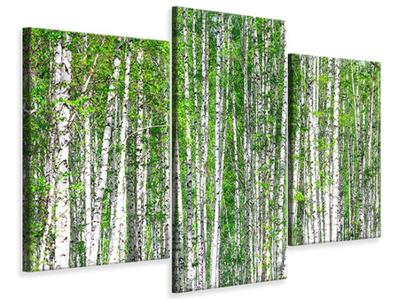 Modern 3 Piece Canvas Print The Birch Forest