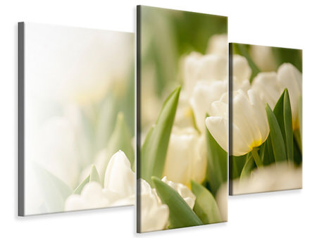 Modern 3 Piece Canvas Print Tulips Perspective