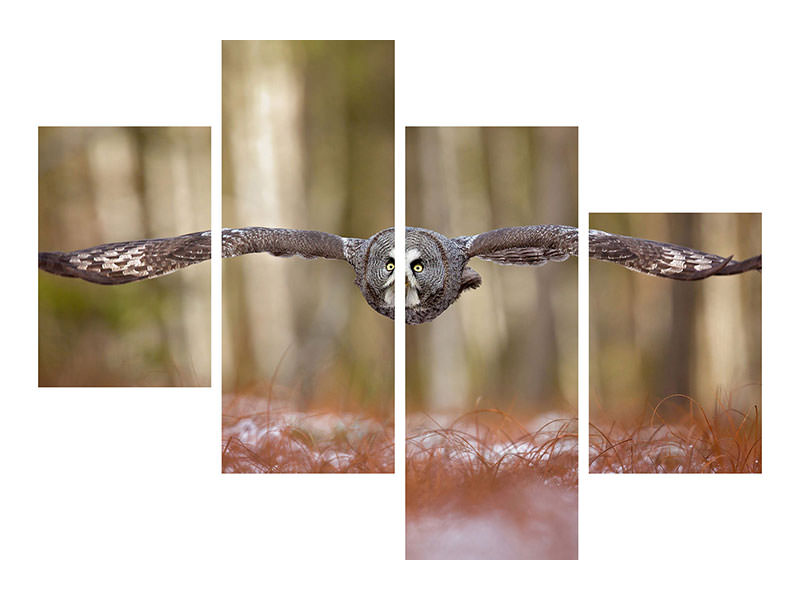 Modern 4 Piece Canvas Print Great Grey Owl