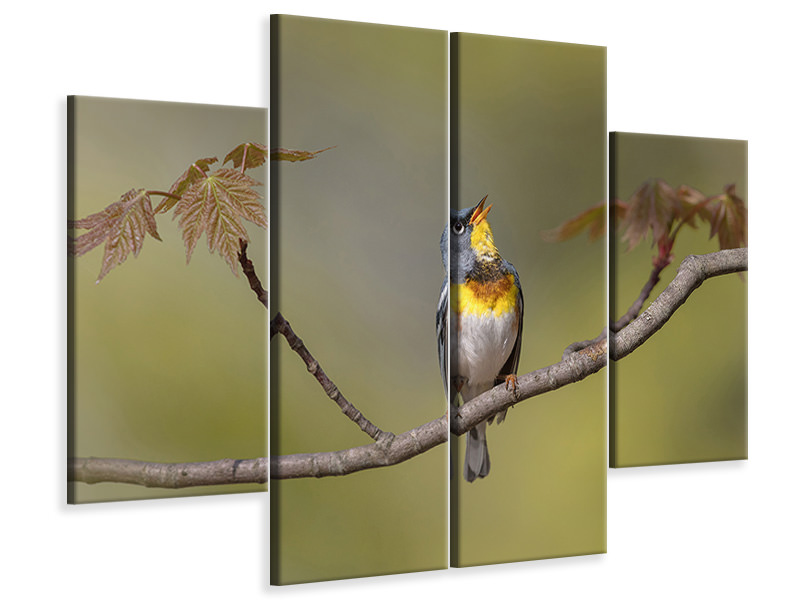 4 Piece Canvas Print Parula On Stage