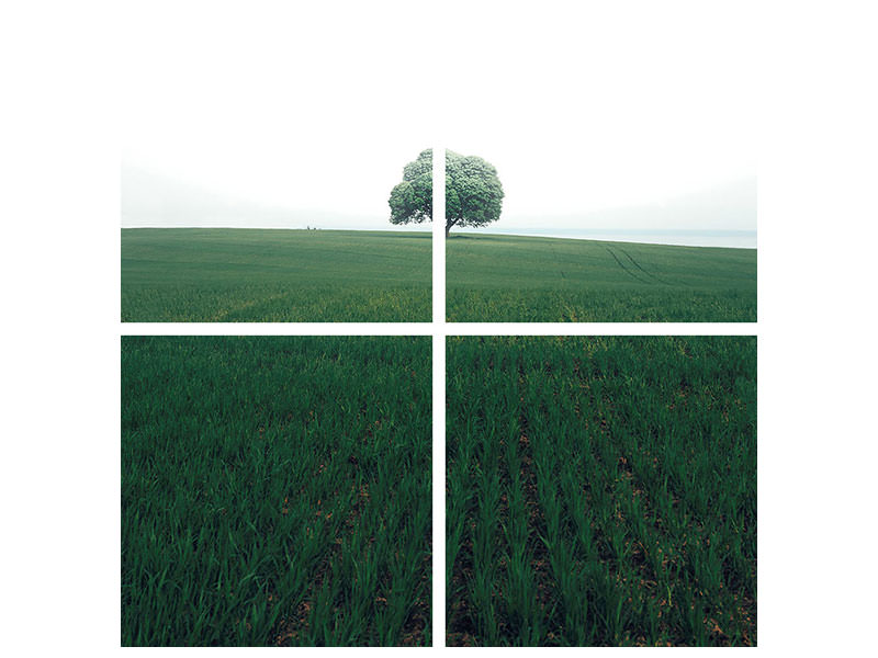 4 Piece Canvas Print The Lonely Oak Tree