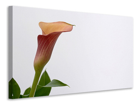 Canvas print Calla in XL