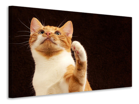 Canvas print Attention clever cat