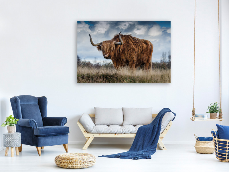 Canvas print Attention bull!