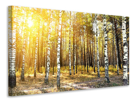 Canvas print Birch Forest