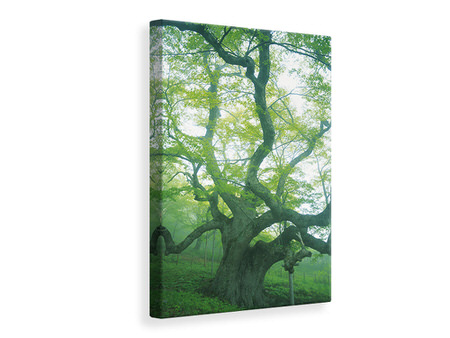 Canvas print The Old Tree