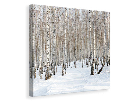 Canvas print Birch Forest Tracks In Snow