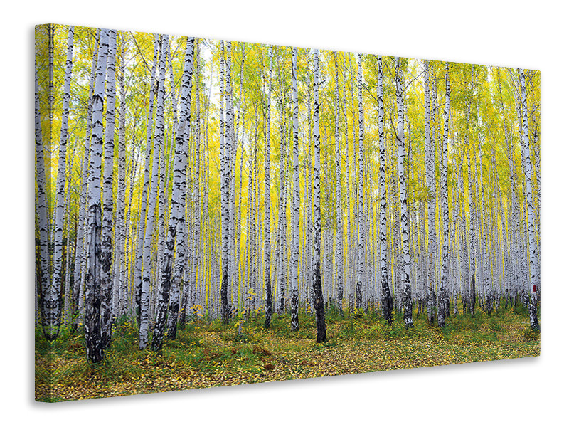 Canvas print Autumnal Birch Forest