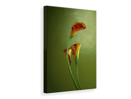 Canvas print 3 Callas