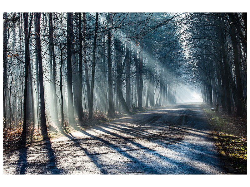 Canvas print Forest In The Light Beam