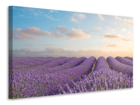 Canvas print The Blooming Lavender Field